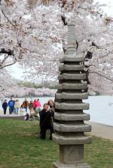 Cherry Blossom shot