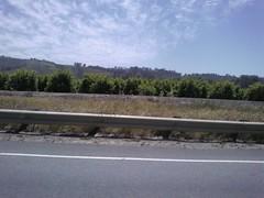 Orange groves just east of Somis