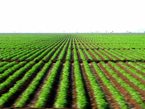 chihuahua verde green lines mexico row crop sinaloa chepe surcos sembradio industrialagriculture
