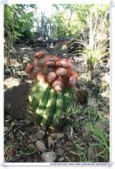 20041016_Guana@BVI_Turfs Cap_001_A