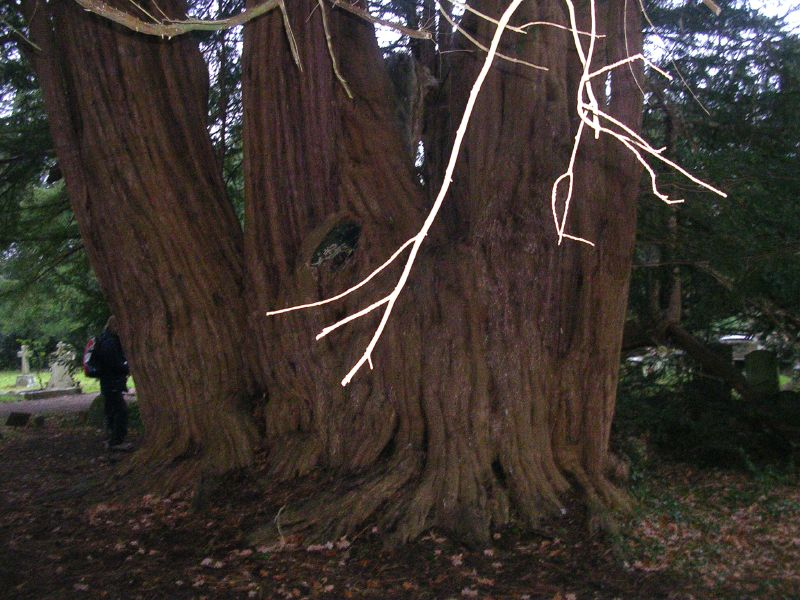 Tandridge Yew Woldingham to Oxted (short)