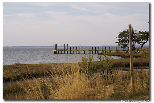 water reeds pier wetlands grasses canonrebelxt chesapeakebay boatdock oceancitymaryland theunforgettablepictures firefighter247