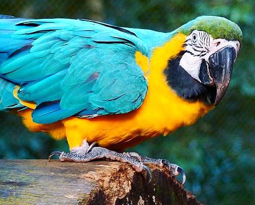 Sexagem de aves silvestres - Petlove - O Maior Petshop Online do Brasil