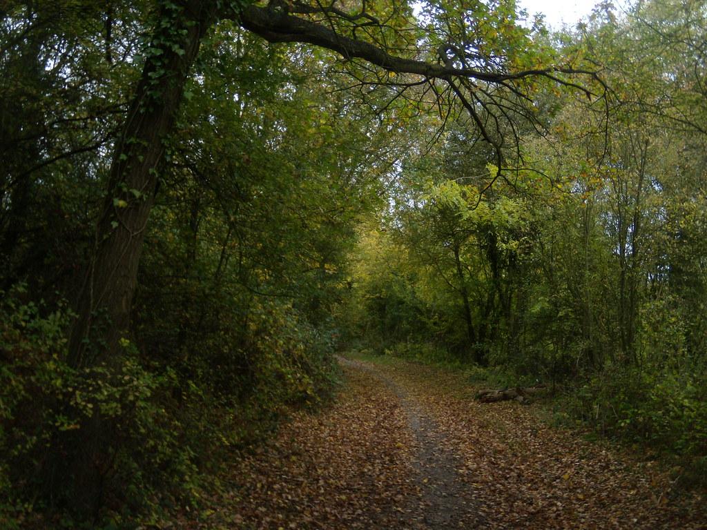 Woodland path Watton-at-Stone Circular