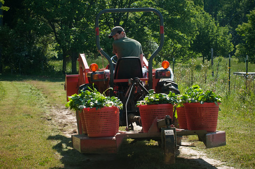 Reece Latron uses a tractor to carry baskets of greens harvested from Amy's Organic Garden in Charles City, VA. While the certification system is rigorous to ensure integrity of the USDA organic label, thousands of producers and handlers continue to invest in these activities to market their products as organic. USDA Photos by Lance Cheung