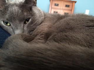 kitty champ