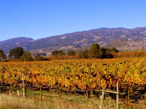 california mountain landscape vineyard vines decor roadtrip2007 november2007