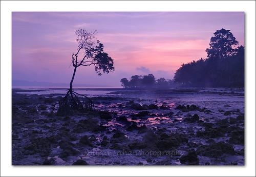 sea cloud india mist color colour tree digital sunrise nikon rocks dslr havelock andaman d80 mywinners elephantabeach