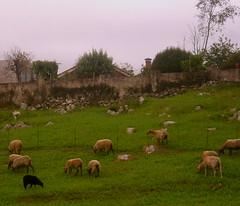 La oveja negra y otras más