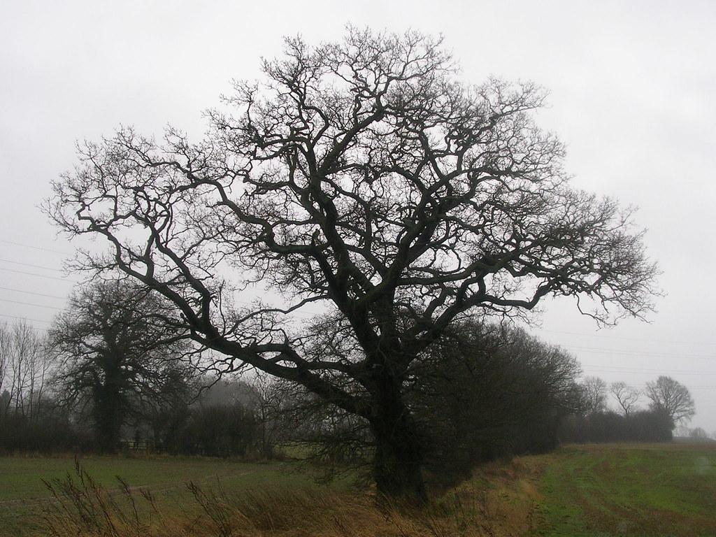 Tree Newbury Racecourse to Woolhampton