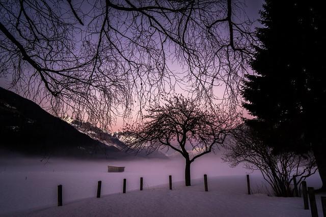 Silently Lost in Dawn
