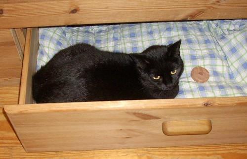 tierfreundetreff druckvorschau wieviel platz braucht eine katze seite 1. Black Bedroom Furniture Sets. Home Design Ideas
