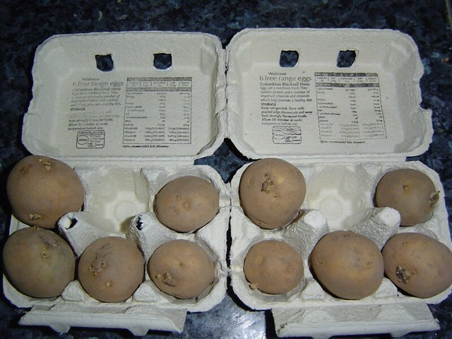 Potatoes chitting