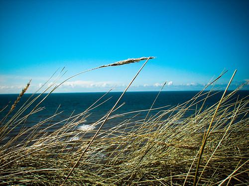 ocean travel blue sea sky holiday nature water grass landscape denmark see coast reisen meer wasser urlaub dune natur himmel hirtshals northsea gras blau landschaft dänemark danmark nordsee skagerrak düne küste nordjylland