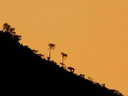 trees sunset hill salvador elsalvador neoslv