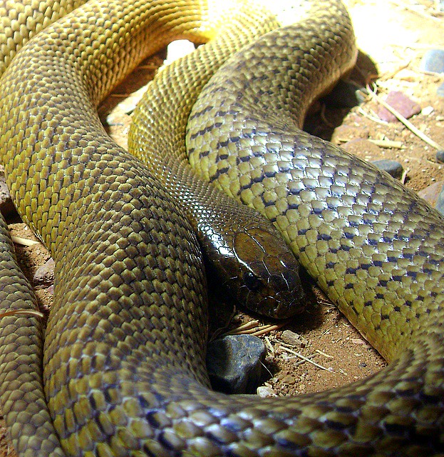 Snakes  Arkive