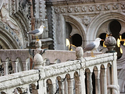 Basilica sea gulls