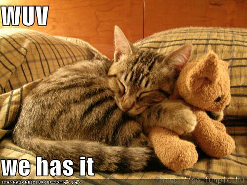 funny-pictures-cat-hugs-stuffed-bear