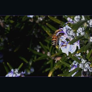 in the garden  - impollinazione