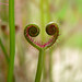 Even insectivorous plants have a heart