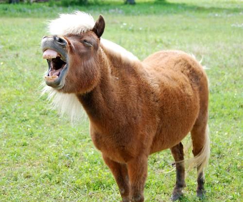 horse nikon texas brenham 18200vr d80 monasteryminiaturehorses