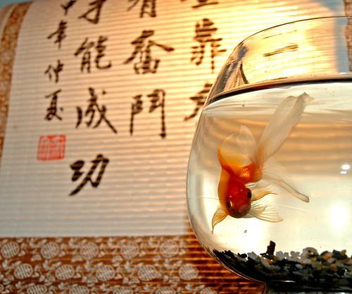 Feng shui y el dinero iii - Como atraer el dinero feng shui ...