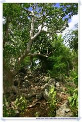 20041020_Guana@BVI_Grand Ghut Trail_003_A