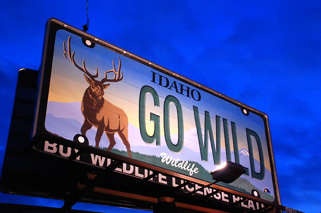 go wild meaning