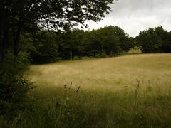 Painting-like field