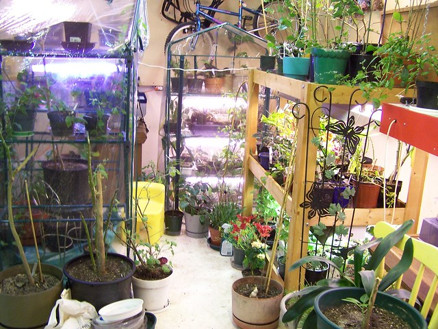 basement greenhouse flickr photo sharing