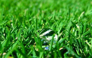 Water Droplet in the Grass