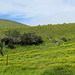 Small photo of Big Island Landscape