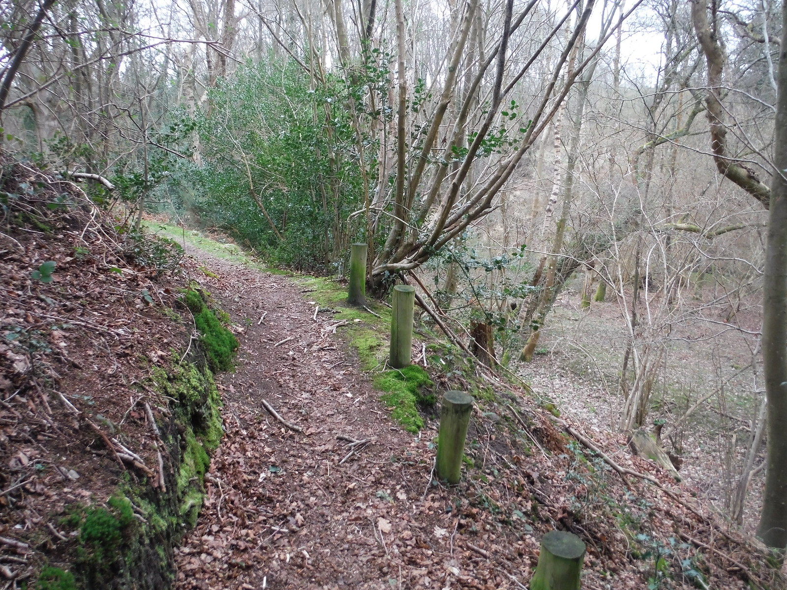 Path through Wood approaching Thursley SWC Walk 144 Haslemere to Farnham
