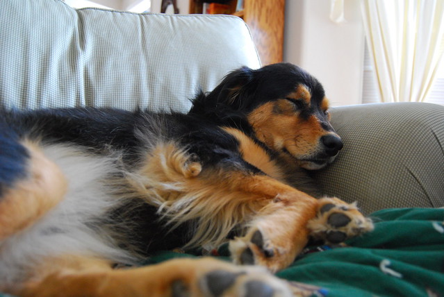 Once again...Maggie on the couch...gettin comfy