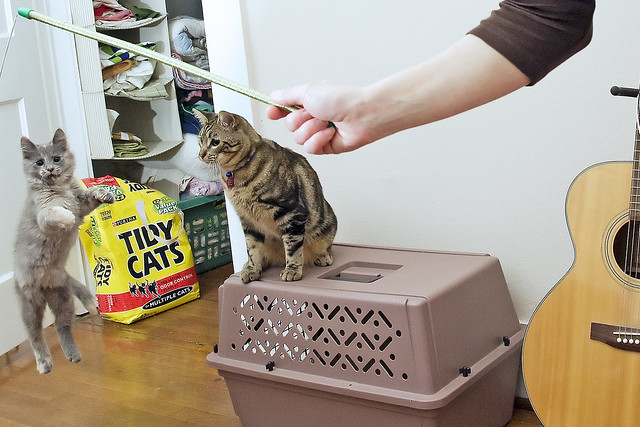 Using Tidy Cats Container To Store Food