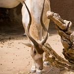 San Diego Zoo 060
