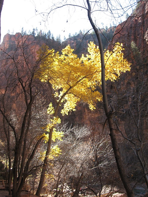 Zions National Park 11.19.06
