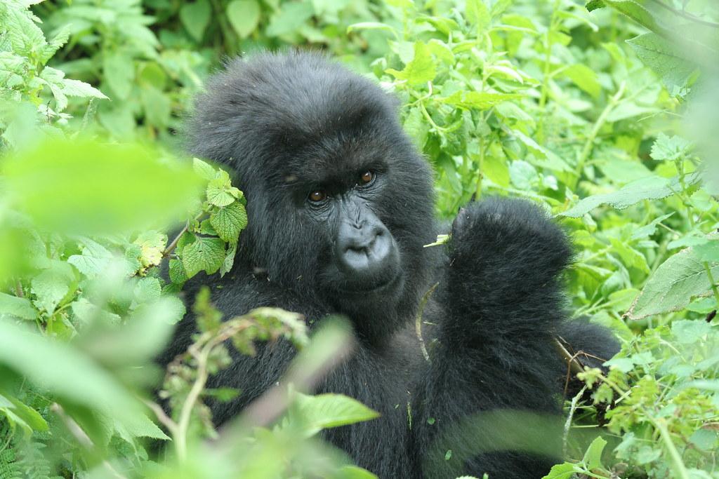 Rwanda028