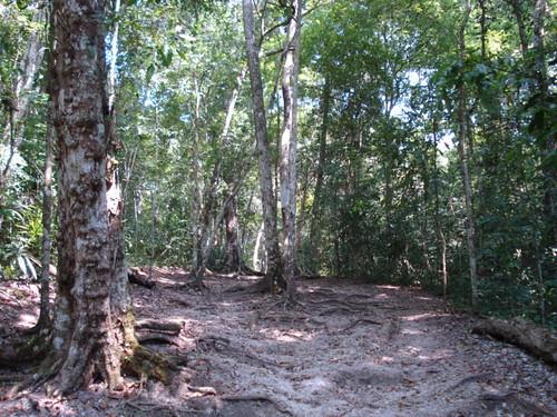 Semana Santa en Tikal
