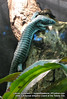 "<a href=""http://www.flickr.com/photos/rhizae/2484588502/"">Photo of Abronia graminea by Lauren Anderson</a>"