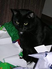 Does Sheba Cat Food Have Phosphorus