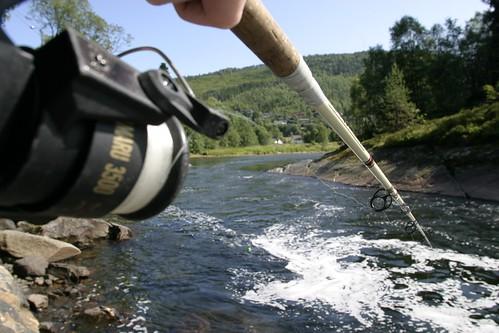 Fishing rod - salmon fishing