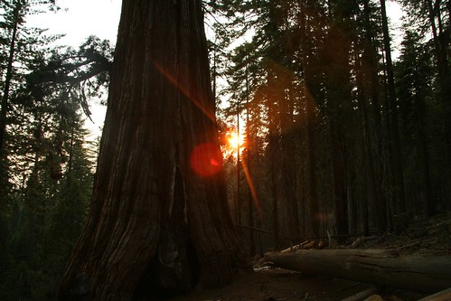 california sunset usa grove yosemite mariposa sequoia mariposagrove