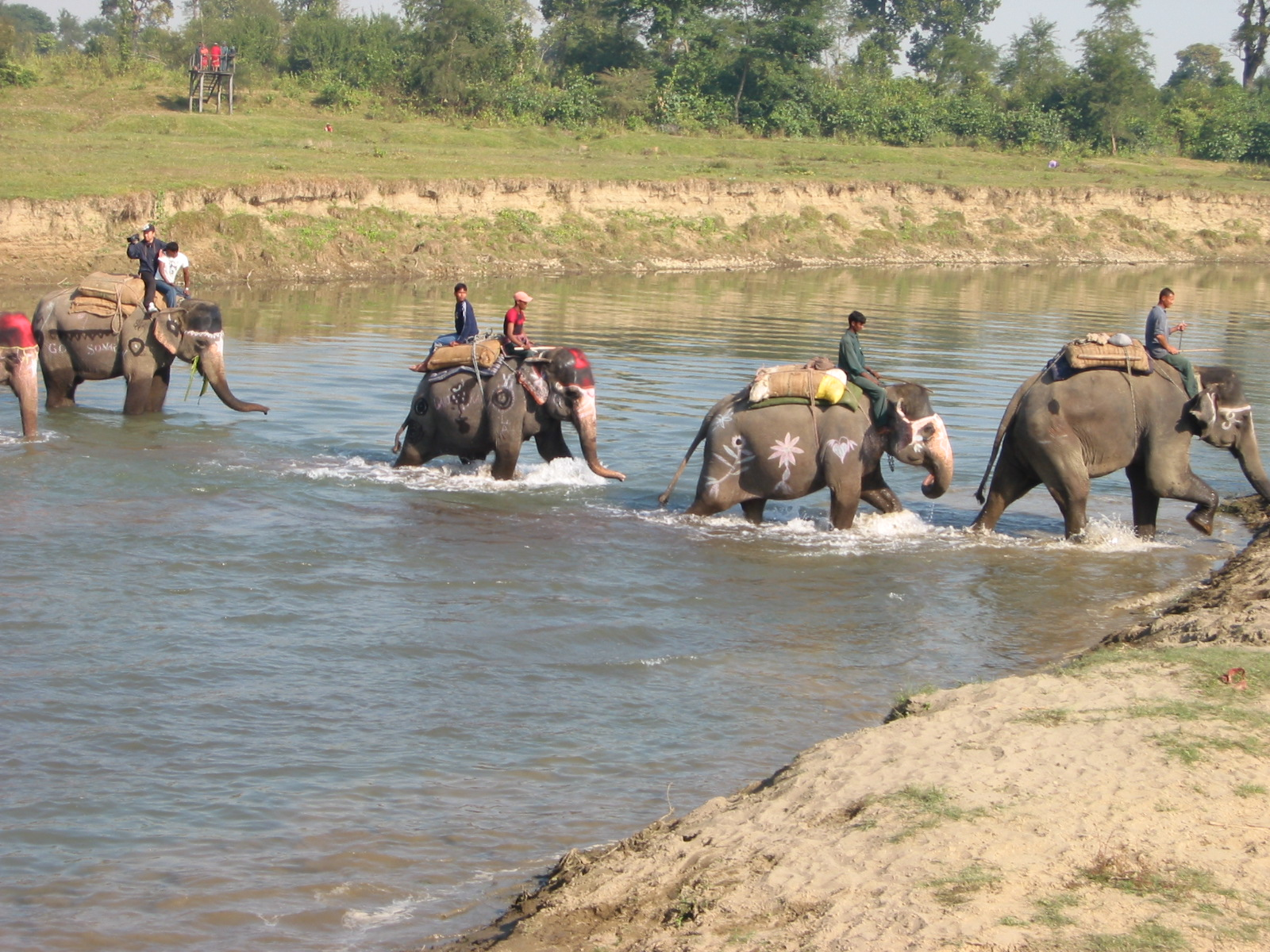 Riding elephants in Royal Chitwan National Park.