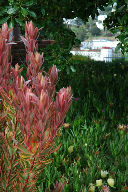 Dsc 3394 Self Realization Fellowship Meditation Garden Encinitas California Usa Flickr