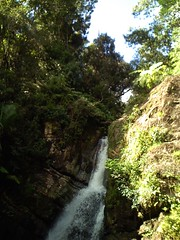 stream, waterfall, woodland, rainforest, water feature, body of water, watercourse, forest, ravine, state park, jungle,