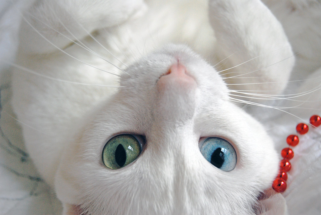 zingrid's most interesting Flickr photos   Picssr Bestofcats