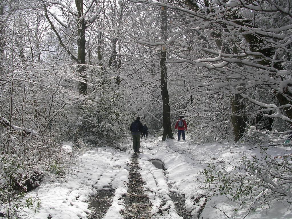 Snow scene Haslemere Circular (silent walk)