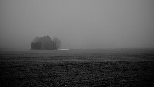 (The Old Barn) Late Winter Bird Edition