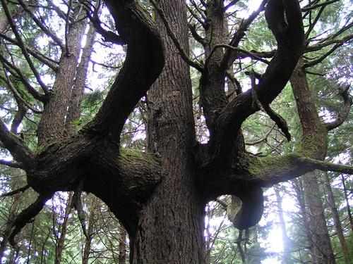 Unusual right-angle tree